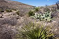 Carlsbad Caverns National Park and White's City, New Mexico, USA - 48344869371.jpg