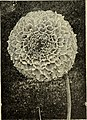 Catalogue (1900) (20370013650).jpg