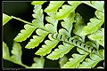 Caterpillars to be classified by family (14831694380).jpg