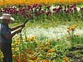 Cenpasuchil garden.jpg
