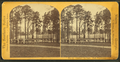 Central City Park. Central Warehouse, from Robert N. Dennis collection of stereoscopic views.png