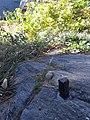 Central Park Survey Bolt 1.jpg