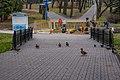 Central childrens park (park Horkaha, Minsk) p08 — ducks.jpg