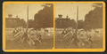 Century plant, from Robert N. Dennis collection of stereoscopic views 2.png
