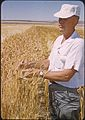 Charles Rohde in a field of wheat, circa 1975 (7951538198).jpg