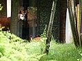 Chester Zoo (15306647465).jpg