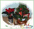 Christmas 2014 Lučenec.jpg