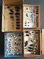 Chrysomelidae collection, Natural History Museum, London 17.jpg