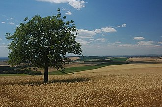 Arable land - Fields in the region of Záhorie in Western Slovakia