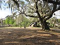 City Park New Orleans 11 March 2018 22.jpg