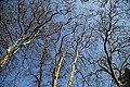 City of London Cemetery and Crematorium - tree spring canopy.jpg