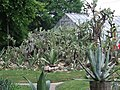 Cactus-Cluj.JPG