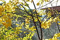 Colours of autumn EUI (6542974619).jpg