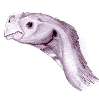 Conchoraptor gracilis profile1