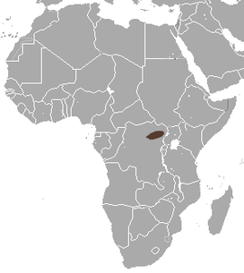 Congo White-toothed Shrew area.png