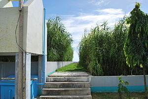 Constructed wetland - Constructed wetland for domestic wastewater treatment in Bayawan City, the Philippines