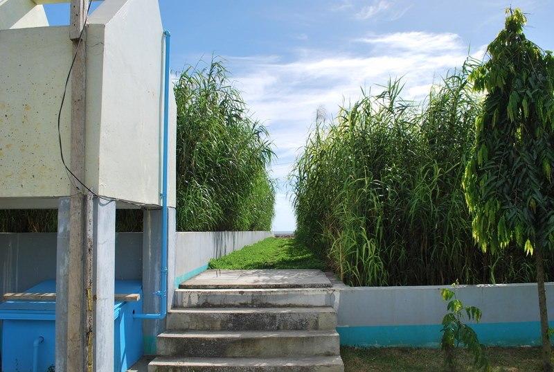 Constructed wetland Bayawan City (4113800865)