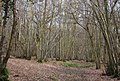 Coppicing, Clayhill Wood - geograph.org.uk - 1759249.jpg