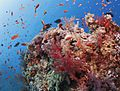 Coral reef fish swim above the coral slope.jpg