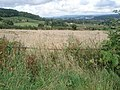 Corn field near The Wonder - geograph.org.uk - 506740.jpg