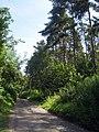 Covet Wood - geograph.org.uk - 1385500.jpg