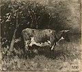 Cow by Anton Mauve Rijksdienst voor het Cultureel Erfgoed B549.jpg