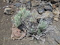 Craters of the Moon National Monument - Idaho (14377769090).jpg