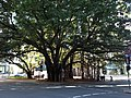 Creek Street, Brisbane 06.2013 061.jpg