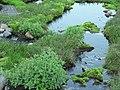 Creek above Sluiskin Falls and plants. (bd22e8b6358e4bdabc94e144505ec672).JPG