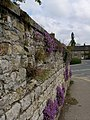 Crevice loving plants enjoy the limestone wall at the entrance to Duncombe Park - geograph.org.uk - 432520.jpg