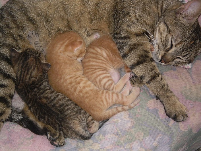 Cybil the cat and her kittens.jpg