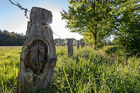 Pasture in the hamlet Börnste, Kirchspiel, Dülmen, North Rhine-Westphalia, Germany