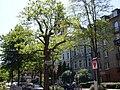Düsseldorf-Unterbilk Florastr.jpg