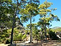 Dalyan - panoramio (23).jpg