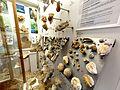 Das Riff-Museum im Bahnhof Gerstetten. 06.jpg