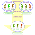 Dawkins' evolution theory.png