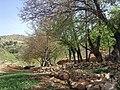 Derak Mount In April.jpg