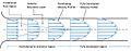 Development of fluid flow in the entrance region of a pipe.jpg