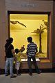 Diorama - Scavengers - Zoological Gallery - Indian Museum - Kolkata 2014-04-04 4385.JPG