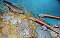 Diorama of a Devonian seafloor 5 (45573090092).jpg