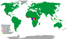 Distribution of the Great Apes.png