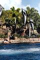 Dolphin Cove 14.jpg