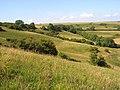 Downland, Sydling St Nicholas - geograph.org.uk - 908360.jpg