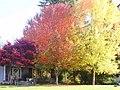 Dramatic Fall Colors at Viking Park - panoramio.jpg