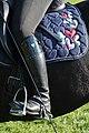 Dressage individuel mondial du cheval percheron 2011Cl J Weber01 (24083479855).jpg