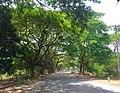 Duong vao khu di tich Go thap, huyen Tháp Mười, Đồng Tháp, Việt Nam - panoramio.jpg