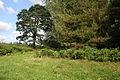 Edge of woodland at Brake Hill - geograph.org.uk - 1427185.jpg