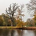 Een in slechte conditie verkerende eik (Quercus) met daarnaast een jonge beuk (Fagus sylvatica). Locatie, Historisch Park Heremastate 02.jpg