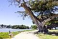 El Estero Lake - panoramio (1).jpg
