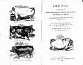 Engraving of Essex Pig by F. Brauston Wellcome L0019076.jpg